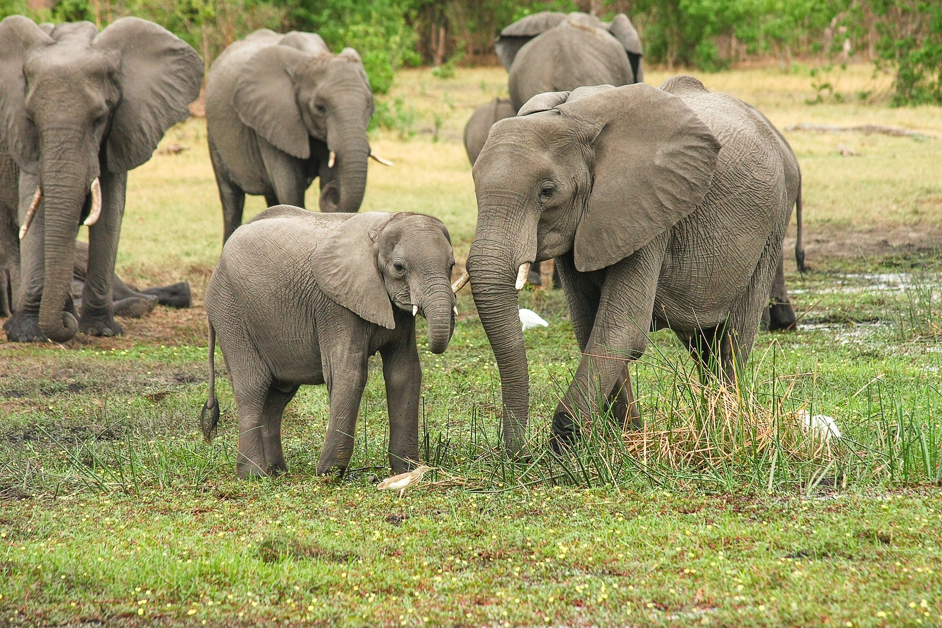Quiz: Animals On Safari! Test Your Knowledge of the Animals of Africa With  This Quiz